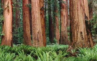 梦见一棵大树或一堆树木被砍